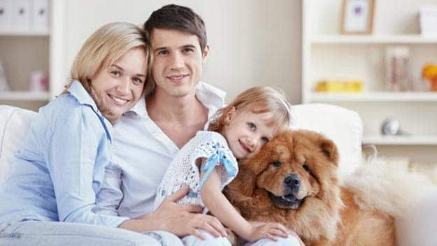 Wills & Trusts dog-young-family Direct Wills Allerton